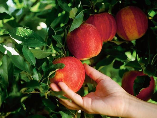 val venosta frutero